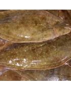 Comprar pescados blancos. Pescadería y Mariscos online