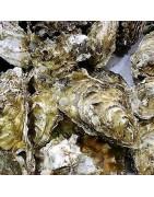Comprar ostiones vivo depurado en la tienda online de Pescados y mariscos anna