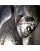 Comprar dorada fresca online en la  tienda pescados y mariscos  anna