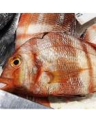 Comprar urta fresca en la tienda online de Pescados y marisco anna
