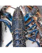 Comprar bogavante vivo online en la tienda de Pescado y mariscos  anna